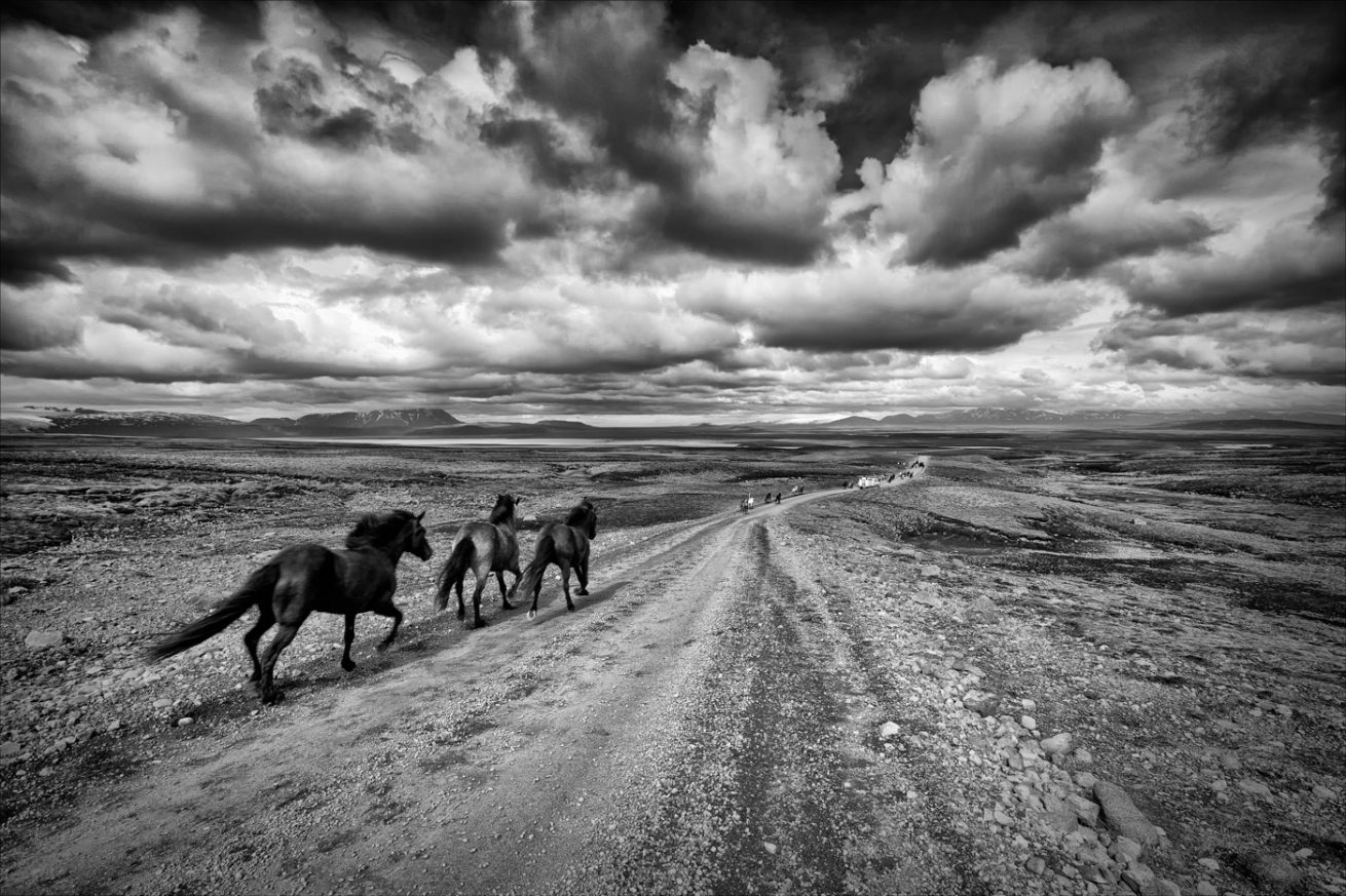Icelandic Horses in the Highlands